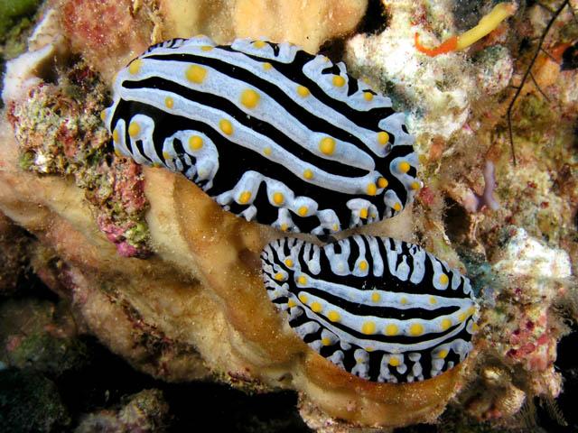 Real ocean fish - photo#12