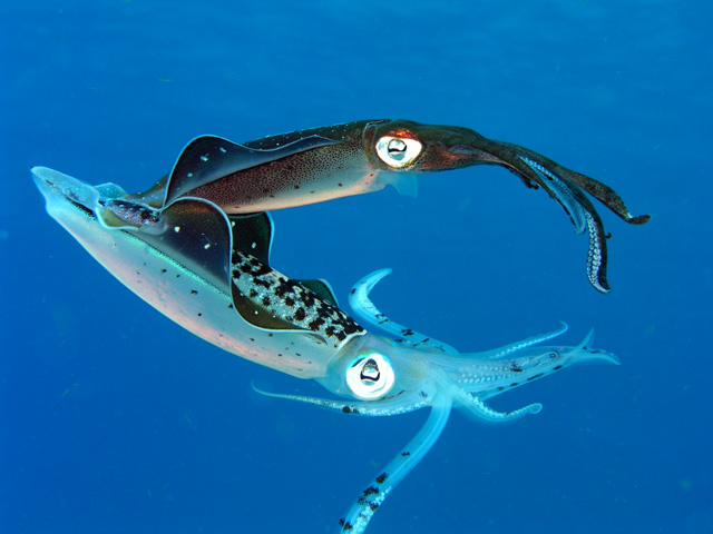 http://chemistry.csudh.edu/faculty/jim/cozumelaug06small/squid.jpg